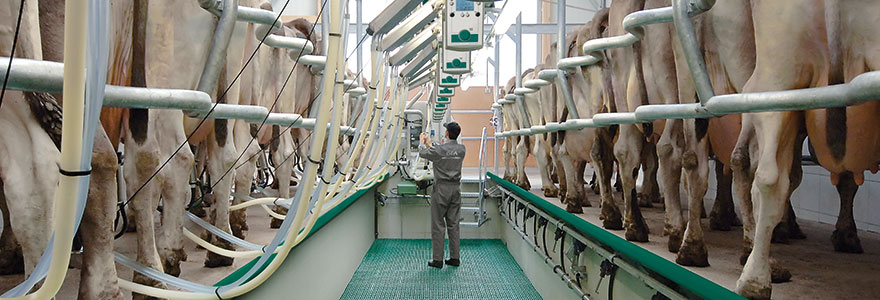 Conventional batch milking parlours