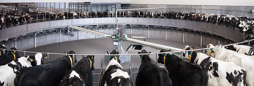 Rotary milking parlours
